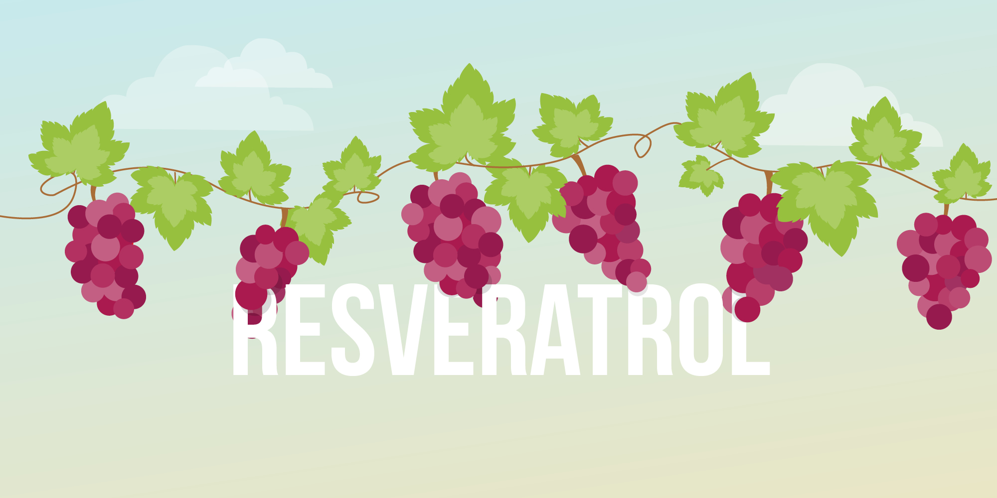 The Potential Health Benefits Of Resveratrol Kindly Care